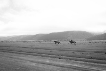 Mongolian Horses By Vivi Pham Tictacartcollection